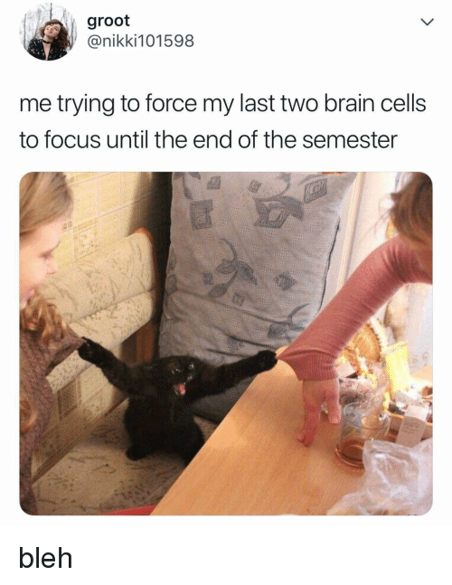 bleh: groot  @nikki101598  me trying to force my last two brain cells  to focus until the end of the semester bleh