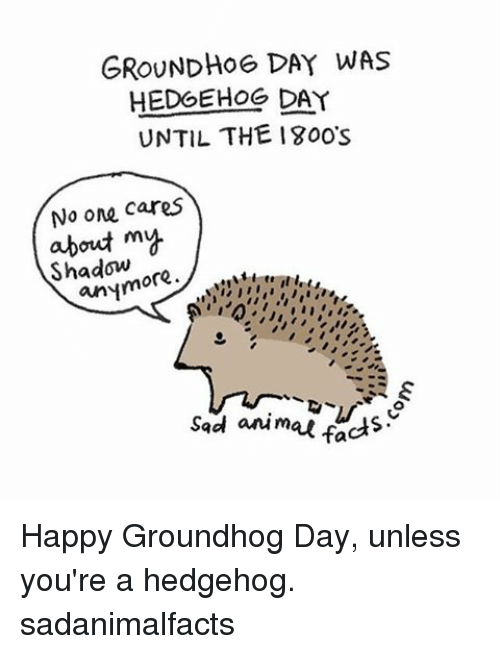 Memes, Groundhog Day, and Hedgehog: GROUNDHOG DAY WAS  HEDGEHOG DAY  UNTIL THE 1800s  No one cares  about my  ore  anym  sad animal facts Happy Groundhog Day, unless you're a hedgehog. sadanimalfacts