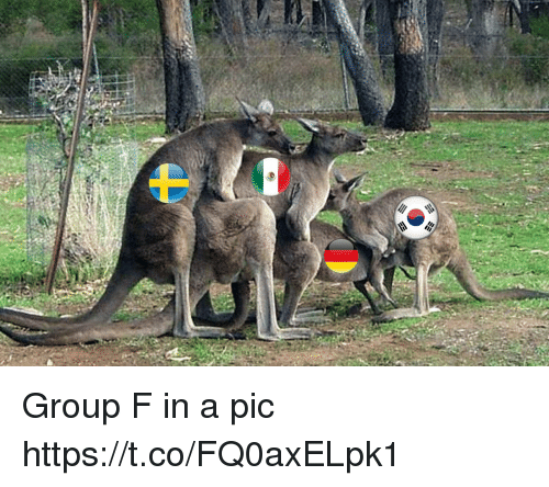 Memes, 🤖, and Group: Group F in a pic https://t.co/FQ0axELpk1
