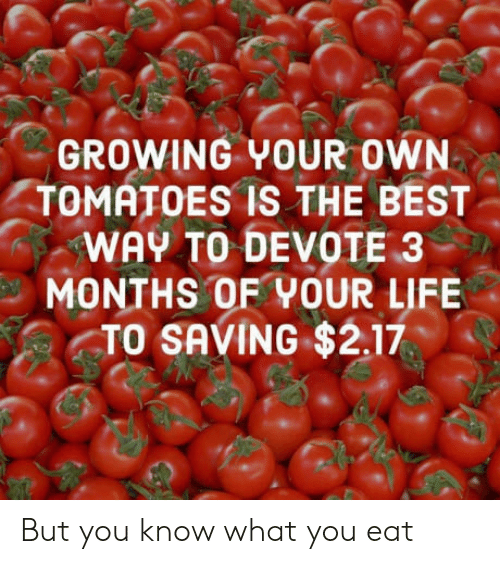 devote: GROWING YOUR OWN  TOMATOES IS THE BEST  WAY TO DEVOTE 3  MONTHS OF YOUR LIFE  TO SAVING $2.17 But you know what you eat