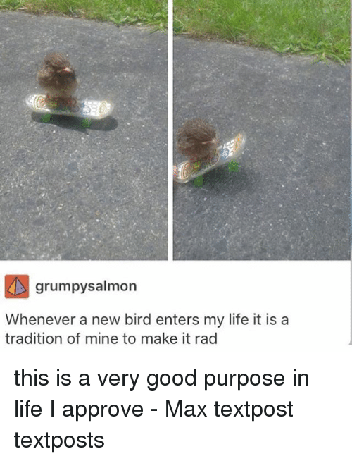 Life, Memes, and Good: grumpysalmon  Whenever a new bird enters my life it is a  tradition of mine to make it rad this is a very good purpose in life I approve - Max textpost textposts