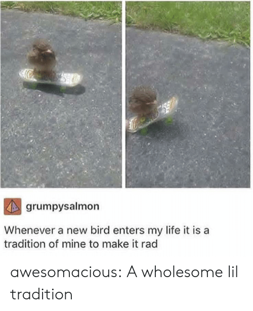 Rad: grumpysalmon  Whenever a new bird enters my life it is  tradition of mine to make it rad awesomacious:  A wholesome lil tradition