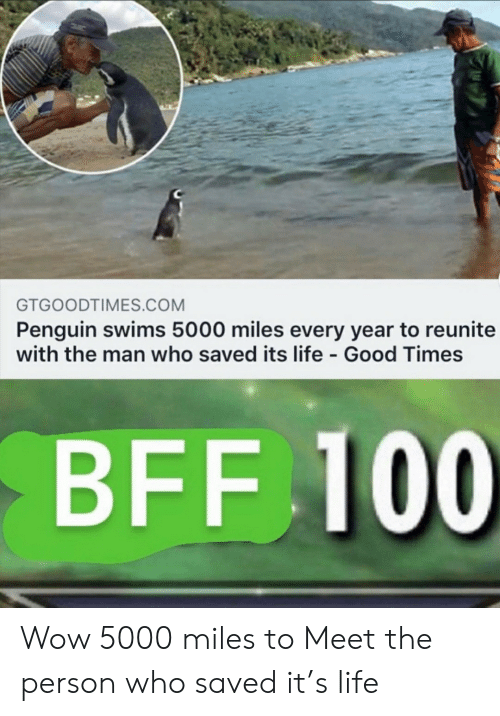 Meet The: GTGOODTIMES.COM  Penguin swims 5000 miles every year to reunite  with the man who saved its life Good Times  BFF 100 Wow 5000 miles to Meet the person who saved it's life