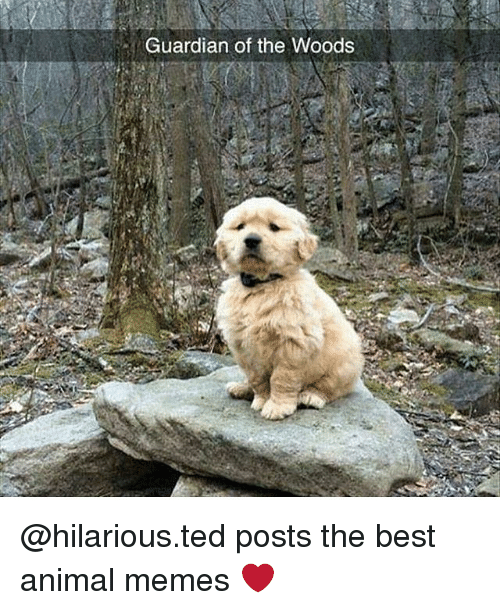 Animals Meme: Guardian of the Woods @hilarious.ted posts the best animal memes ❤️