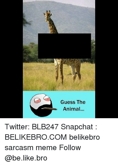 Be Like, Meme, and Memes: Guess The  Animal.. Twitter: BLB247 Snapchat : BELIKEBRO.COM belikebro sarcasm meme Follow @be.like.bro