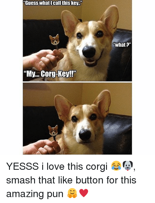 """Memes, 🤖, and Key: """"Guess what I call this key.""""  """"My... Corg-Key!""""  What?"""" YESSS i love this corgi 😂🐶, smash that like button for this amazing pun 🤗♥️"""