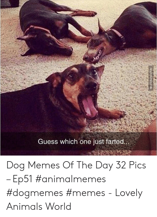 Farted: Guess which one just farted.  DAILYLOLPICS.COM Dog Memes Of The Day 32 Pics – Ep51 #animalmemes #dogmemes #memes - Lovely Animals World
