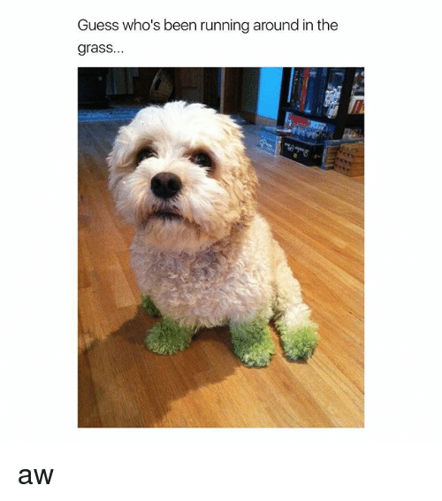 Guess, Girl Memes, and Running: Guess who's been running around in the  grass aw