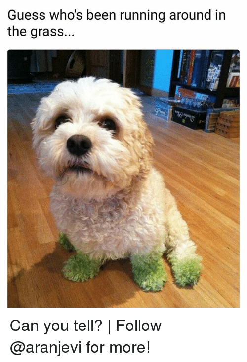 Memes, Guess, and Running: Guess who's been running around in  the grass... Can you tell? | Follow @aranjevi for more!