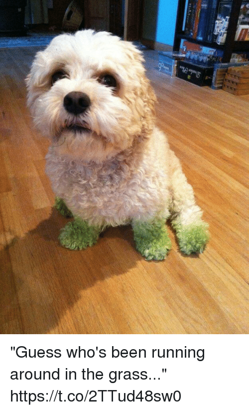 """Funny, Awkward, and Guess: """"Guess who's been running around in the grass..."""" https://t.co/2TTud48sw0"""