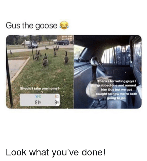 gus: Gus the goose  Thanks for voting guysi  grabbed one and named  him Gus but we got  caught so now were both  going to jail  Should I take one home?  YES  N0 Look what you've done!