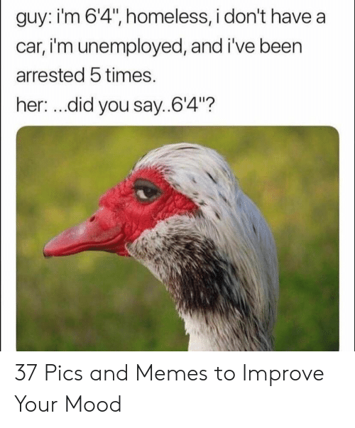 "did-you-say: guy: i'm 6'4"", homeless, i don't have a  car, i'm unemployed, and i've been  arrested 5 times.  her: ...did you say..64""? 37 Pics and Memes to Improve Your Mood"
