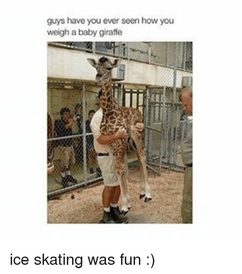 baby giraffe: guys have you ever seen how you  weigh a baby giraffe ice skating was fun :)