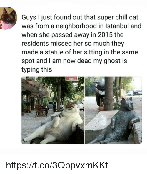 Chill, Memes, and Ghost: Guys I just found out that super chill cat  was from a neighborhood in Istanbul and  when she passed away in 2015 the  residents missed her so much they  made a statue of her sitting in the same  spot and I am now dead my ghost is  typing this https://t.co/3QppvxmKKt