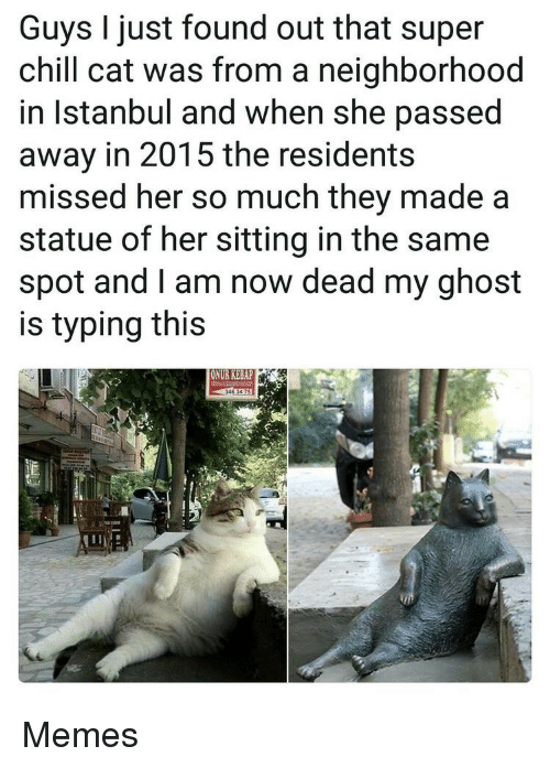 Istanbul: Guys I just found out that super  chill cat was from a neighborhood  in Istanbul and when she passed  away in 2015 the residents  missed her so much they made a  statue of her sitting in the same  spot and I am now dead my ghost  is typing this  ONUR KEBAP Memes