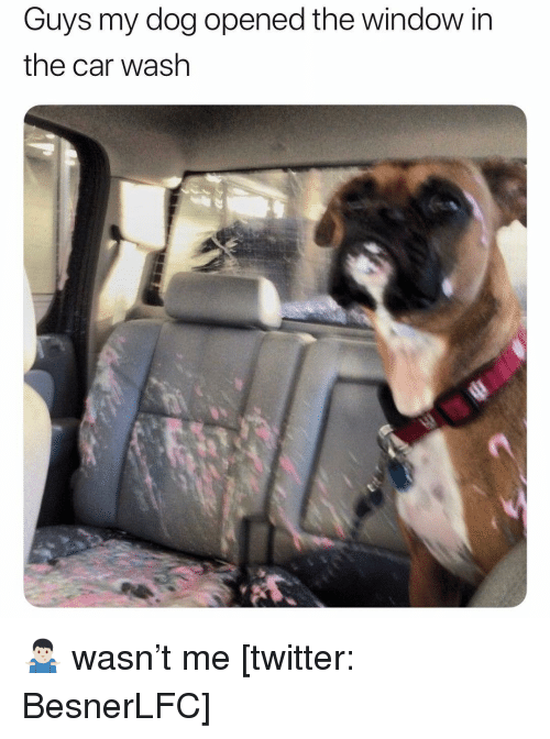 Memes, Twitter, and 🤖: Guys my dog opened the window in  the car wash 🤷🏻♂️ wasn't me [twitter: BesnerLFC]