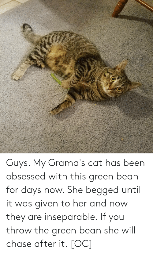 Was Given: Guys. My Grama's cat has been obsessed with this green bean for days now. She begged until it was given to her and now they are inseparable. If you throw the green bean she will chase after it. [OC]