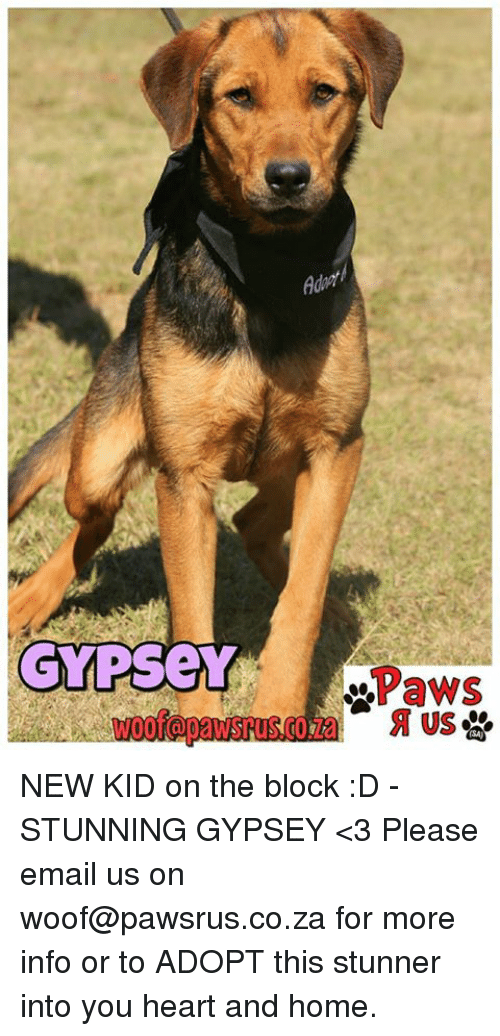 new kids on the block: GYPseY  Paws  US NEW KID on the block :D - STUNNING GYPSEY <3 Please email us on woof@pawsrus.co.za for more info or to ADOPT this stunner into you heart and home.