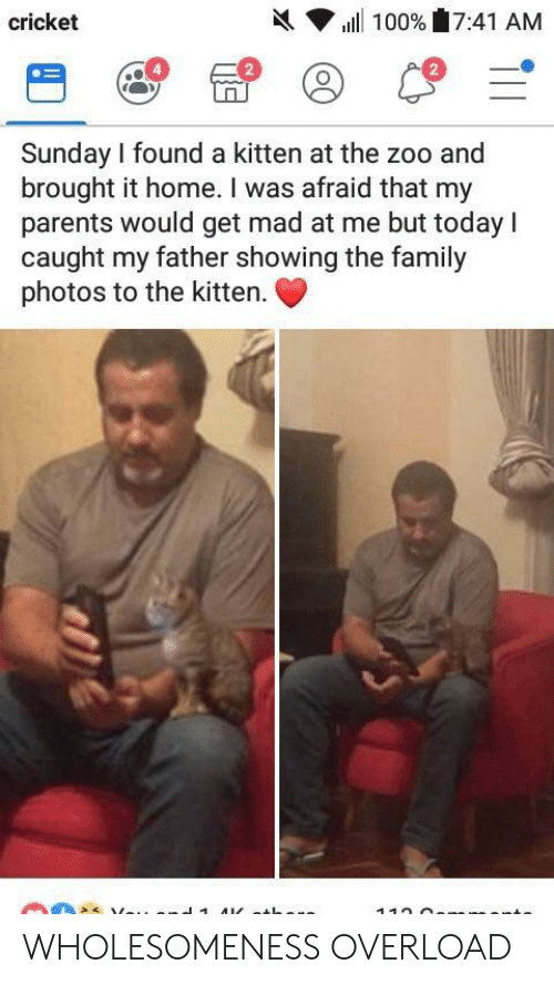 Family Photos: h( ▼ ill 100%'17:41 AM  cricket  2  2  Sunday I found a kitten at the zoo and  brought it home. I was afraid that my  parents would get mad at me but today I  caught my father showing the family  photos to the kitten. WHOLESOMENESS OVERLOAD