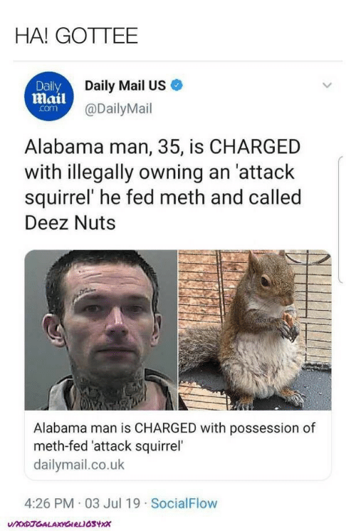 Daily Mail: HA! GOTTEE  Daily  Daily Mail US  Mail@DailyMail  com  Alabama man, 35, is CHARGED  with illegally owning an 'attack  squirrel' he fed meth and called  Deez Nuts  Alabama man is CHARGED with possession of  meth-fed 'attack squirrel'  dailymail.co.uk  4:26 PM 03 Jul 19 SocialFlow  UXXDJGALAXYGIRLIOSYX