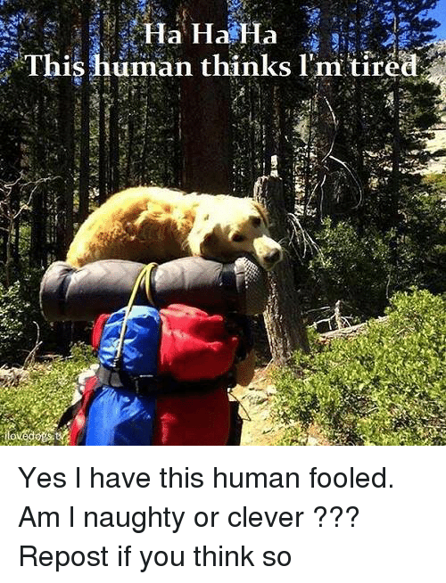Repost If: Ha Ha Ha  This  human thinks hem tired Yes l have this human fooled. Am l naughty or clever ??? Repost if you think so