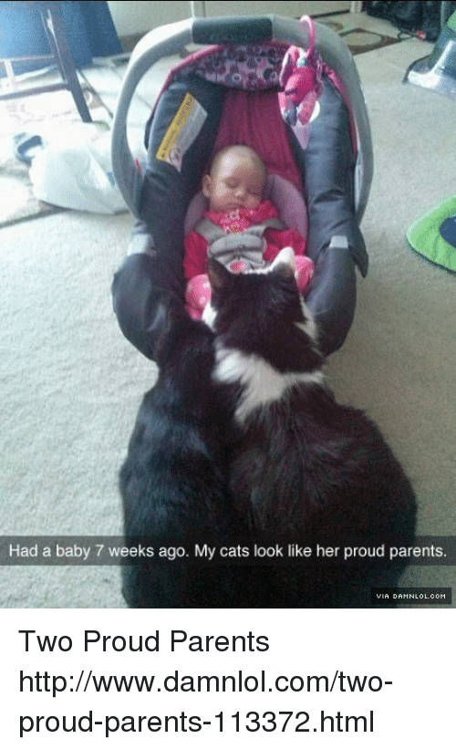 damnlol: Had a baby 7 weeks ago. My cats look like her proud parents. Two Proud Parents http://www.damnlol.com/two-proud-parents-113372.html
