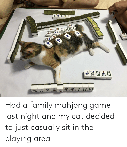 Sit In: Had a family mahjong game last night and my cat decided to just casually sit in the playing area