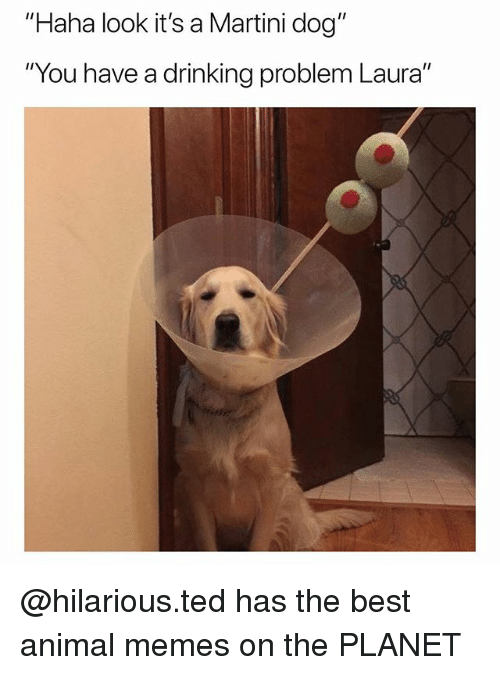 """Drinking, Memes, and Ted: """"Haha look it's a Martini dog""""  """"You have a drinking problem Laura"""" @hilarious.ted has the best animal memes on the PLANET"""