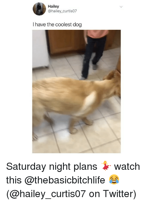 saturday night: Hailey  @hailey_curtis07  I have the coolest dog Saturday night plans 💃 watch this @thebasicbitchlife 😂 (@hailey_curtis07 on Twitter)