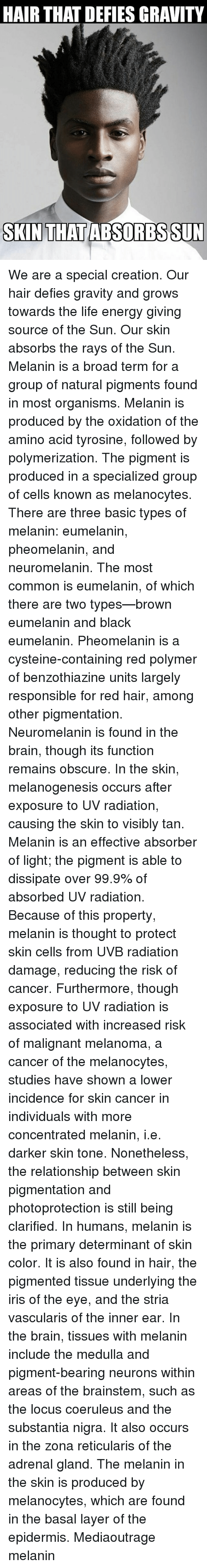 amino acids: HAIR THAT DEFIES GRAVITY  SKIN THATABSORBS SUN We are a special creation. Our hair defies gravity and grows towards the life energy giving source of the Sun. Our skin absorbs the rays of the Sun. Melanin is a broad term for a group of natural pigments found in most organisms. Melanin is produced by the oxidation of the amino acid tyrosine, followed by polymerization. The pigment is produced in a specialized group of cells known as melanocytes. There are three basic types of melanin: eumelanin, pheomelanin, and neuromelanin. The most common is eumelanin, of which there are two types—brown eumelanin and black eumelanin. Pheomelanin is a cysteine-containing red polymer of benzothiazine units largely responsible for red hair, among other pigmentation. Neuromelanin is found in the brain, though its function remains obscure. In the skin, melanogenesis occurs after exposure to UV radiation, causing the skin to visibly tan. Melanin is an effective absorber of light; the pigment is able to dissipate over 99.9% of absorbed UV radiation. Because of this property, melanin is thought to protect skin cells from UVB radiation damage, reducing the risk of cancer. Furthermore, though exposure to UV radiation is associated with increased risk of malignant melanoma, a cancer of the melanocytes, studies have shown a lower incidence for skin cancer in individuals with more concentrated melanin, i.e. darker skin tone. Nonetheless, the relationship between skin pigmentation and photoprotection is still being clarified. In humans, melanin is the primary determinant of skin color. It is also found in hair, the pigmented tissue underlying the iris of the eye, and the stria vascularis of the inner ear. In the brain, tissues with melanin include the medulla and pigment-bearing neurons within areas of the brainstem, such as the locus coeruleus and the substantia nigra. It also occurs in the zona reticularis of the adrenal gland. The melanin in the skin is produced by melanocytes, w
