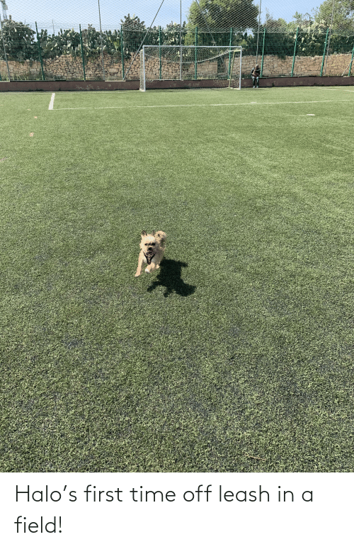 Halo: Halo's first time off leash in a field!