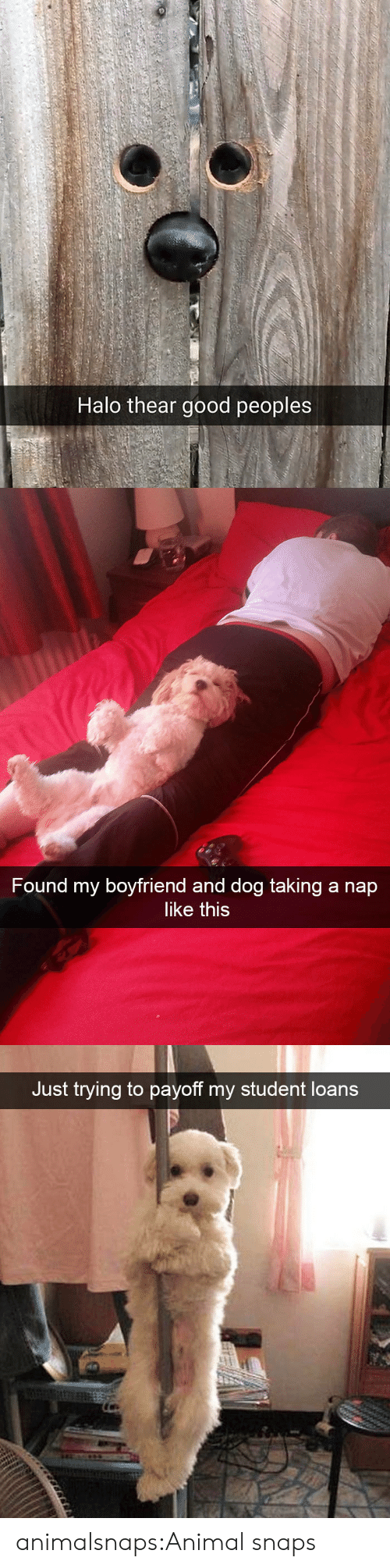 Loans: Halo thear good peoples   Found my boyfriend and dog taking a nap  like this   Just trying to payoff my student loans animalsnaps:Animal snaps