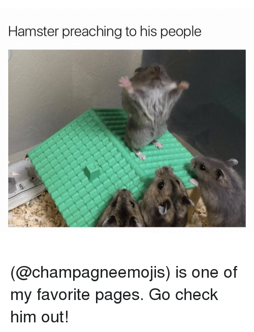 Funny, Meme, and Preach: Hamster preaching to his people (@champagneemojis) is one of my favorite pages. Go check him out!
