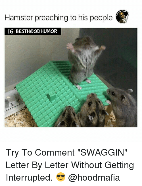 "Memes, Preach, and Hamster: Hamster preaching to his people  IGI: BESTHOODHUMOR Try To Comment ""SWAGGIN"" Letter By Letter Without Getting Interrupted. 😎 @hoodmafia"