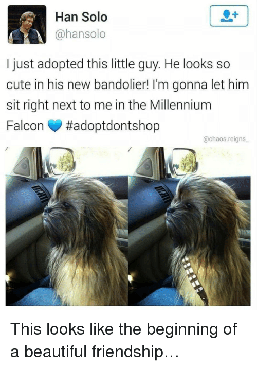 Millennium Falcon: Han Solo  @hansolo  I just adopted this little guy. He looks so  cute in his new bandolier! I'm gonna let him  sit right next to me in the Millennium  Falcon #adoptdontshop  @chaos.reigns <p>This looks like the beginning of a beautiful friendship&hellip;</p>