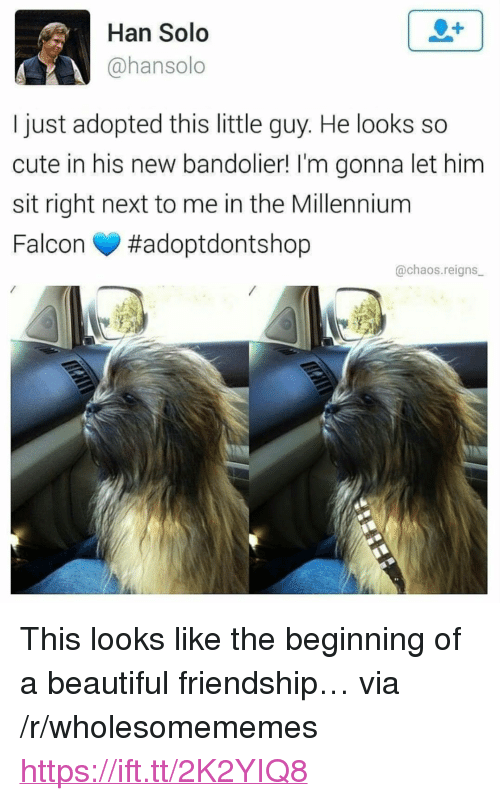 """Millennium Falcon: Han Solo  @hansolo  I just adopted this little guy. He looks so  cute in his new bandolier! I'm gonna let him  sit right next to me in the Millennium  Falcon #adoptdontshop  @chaos.reigns <p>This looks like the beginning of a beautiful friendship&hellip; via /r/wholesomememes <a href=""""https://ift.tt/2K2YIQ8"""">https://ift.tt/2K2YIQ8</a></p>"""