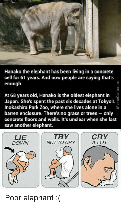 Crying, Memes, and Saw: Hanako the elephant has been living in a concrete  cell for 61 years. And now people are saying that's  enough.  At 68 years old, Hanako is the oldest elephant in  Japan. She's spent the past six decades at Tokyo's E  Inokashira Park Zoo, where she lives alone in a  barren enclosure. There's no grass or trees only  concrete floors and walls. It's unclear when she last  saw another elephant.  CRY  TRY  LIE  A LOT  NOT TO CRY  DOWN Poor elephant :(