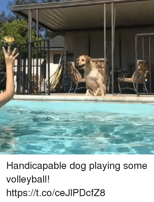 Memes, Volleyball, and 🤖: Handicapable dog playing some volleyball!  https://t.co/ceJlPDcfZ8