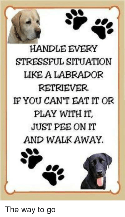 Memes, 🤖, and Labrador: HANDLE EVERY  STRESSFUL SITUATION  LIKE A LABRADOR  RETRIEVER.  IF YOU CAN'T EAT IT OR  PLAY WITH IT,  JUST PEE ON IT  AND WALK AWAY. The way to go