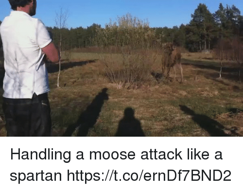spartans: Handling a moose attack like a spartan  https://t.co/ernDf7BND2