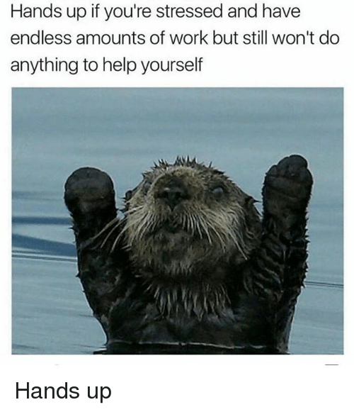 Memes, Work, and Help: Hands up if you're stressed and have  endless amounts of work but still won't do  anything to help yourself Hands up