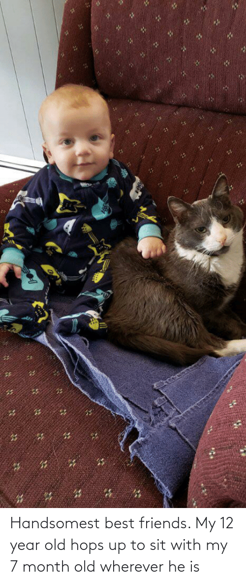 hops: Handsomest best friends. My 12 year old hops up to sit with my 7 month old wherever he is