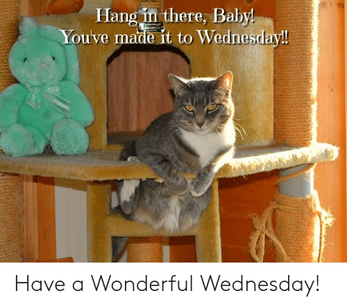 Have A Wonderful Wednesday: Hang in there, Baby  Youve made it to Wednesday! Have a Wonderful Wednesday!