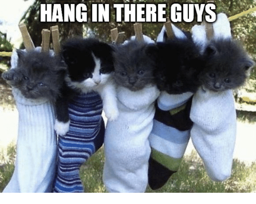 Memes, 🤖, and Guys: HANG IN THERE GUYS
