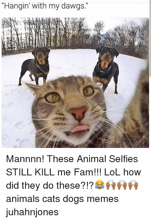 Dawgs: Hangin' with my dawgs. Mannnn! These Animal Selfies STILL KILL me Fam!!! LoL how did they do these?!?😂🙌🏾🙌🏾🙌🏾 animals cats dogs memes juhahnjones