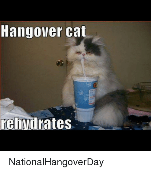 25 best memes about hangover cats hangover cats memes