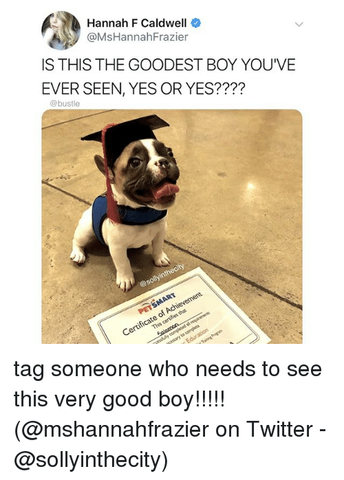 Memes, Twitter, and Good: Hannah F Caldwell  @MsHannahFrazier  IS THIS THE GOODEST BOY YOU'VE  EVER SEEN, YES OR YES????  @bustle  @sollyinthecity  Certificate of Achievement tag someone who needs to see this very good boy!!!!! (@mshannahfrazier on Twitter - @sollyinthecity)