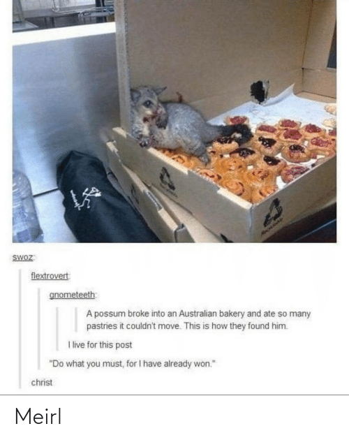 "i live: HAOLIAY  SWOZ:  flextrovert  gnometeeth  A possum broke into an Australian bakery and ate so many  pastries it couldn't move. This is how they found him.  I live for this post  ""Do what you must, for I have already won.""  christ Meirl"