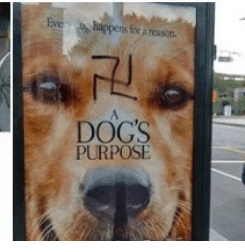 how to give a dog a purpose