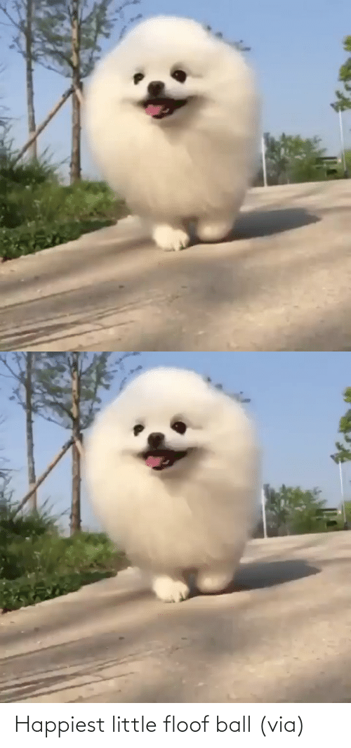 ball: Happiest little floof ball (via)